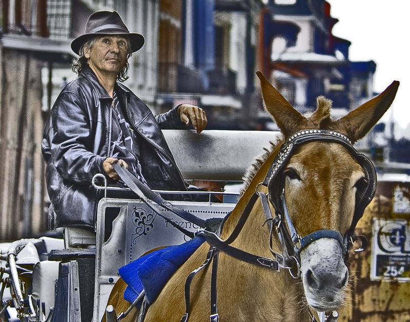 New Orleans Buggy Driver