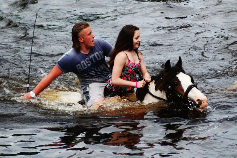 Swimming the horses 3