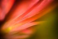 Flower Rays /dm1dave/