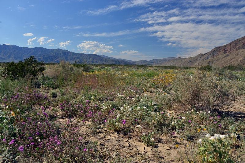 Borreo Desert