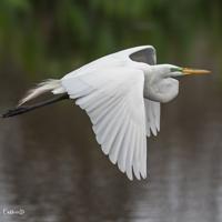 Working Toward Getting Successful Wildlife Photos