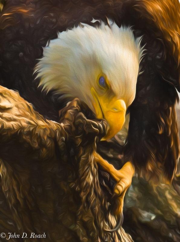 Eagle Feaking