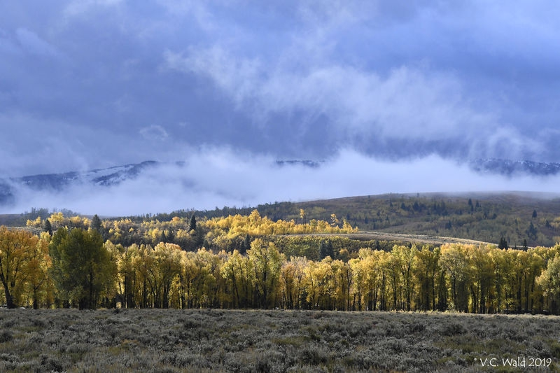 Gold along the Gros Ventre