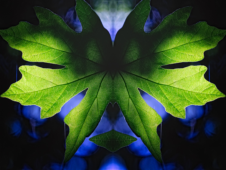Patterns and Light:  Big Sur Leaf Double