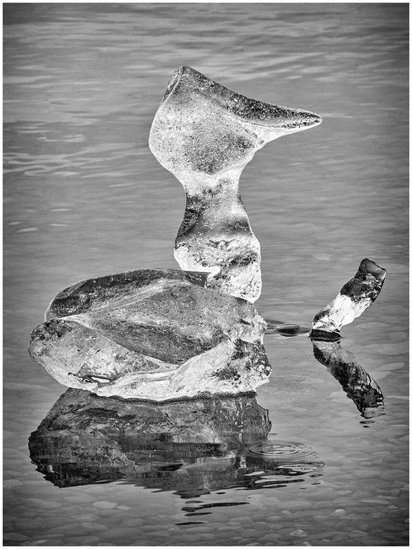 The ice duck
