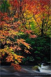 Colors of Autumn /cchoc/