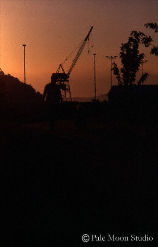 Dinasours at sunset