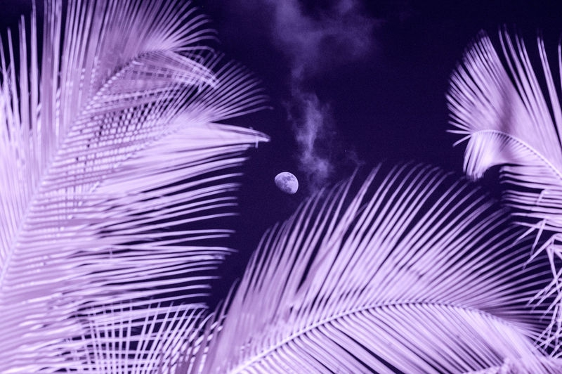 PALMS_and_MOON_0612