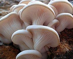 edibles - oysters /natashadak/