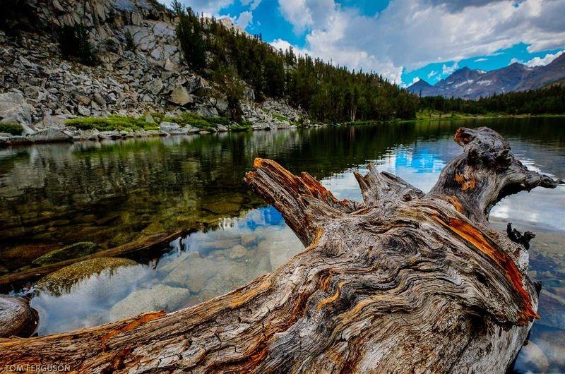 Tangled Wood on Lake