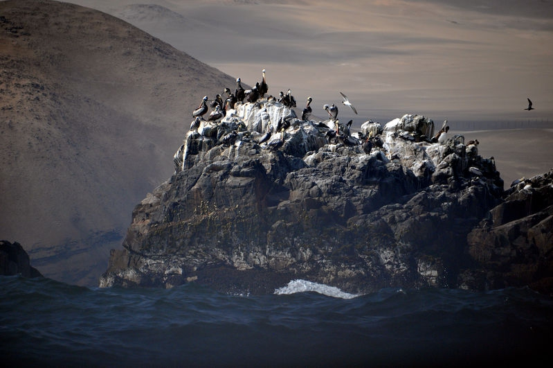 Pelicans on Rock (2nd picture)