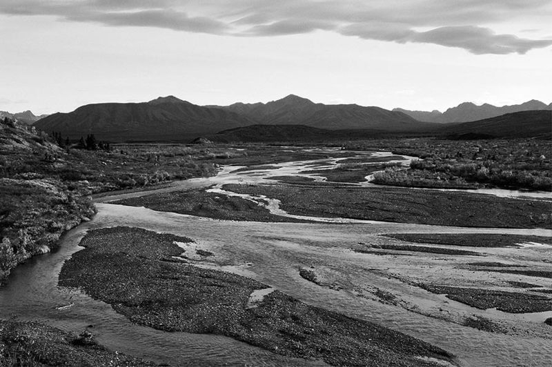 Denali, Savage River, 2009-09-08