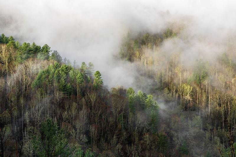 Cataloochee Fog