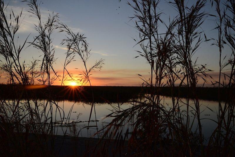 Everglades Sunset