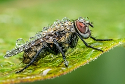 Winner May Macro
