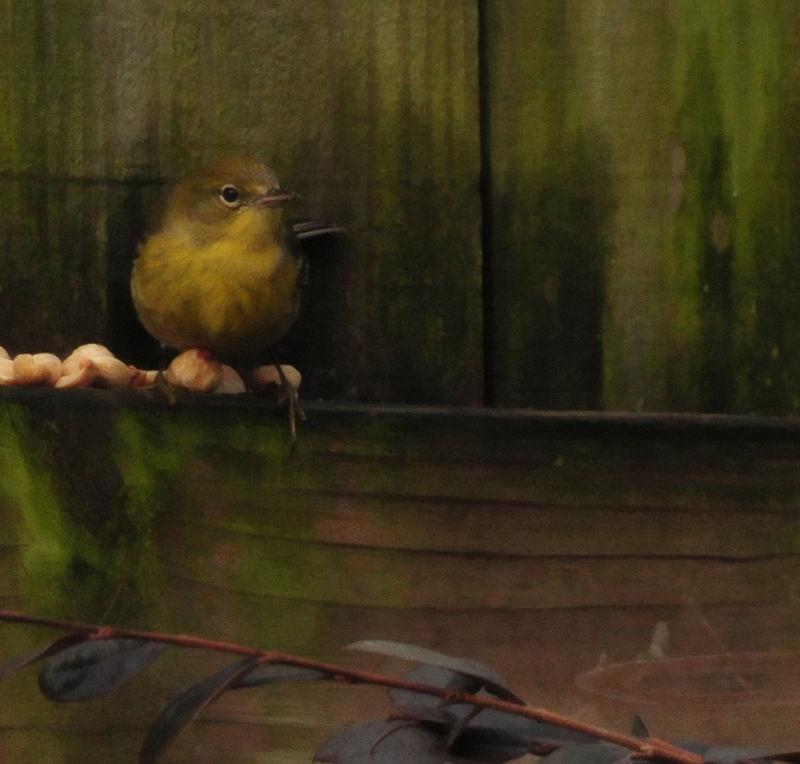 Soft Bird