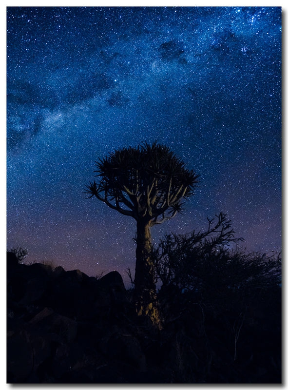 The Wonders of Nature, Milky Way over quiver tree