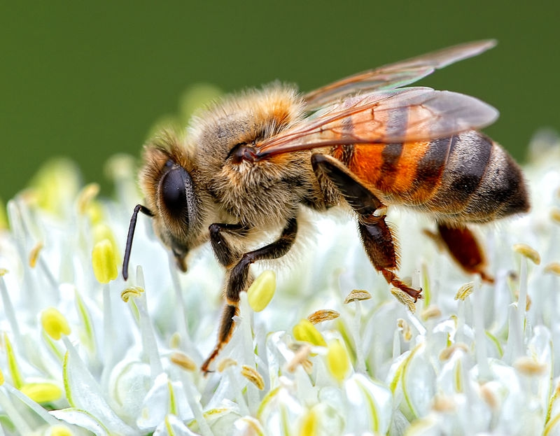 Pollinating the Earth