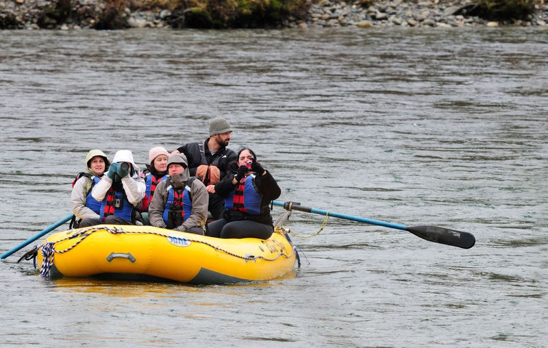Eagles on the Skagit River