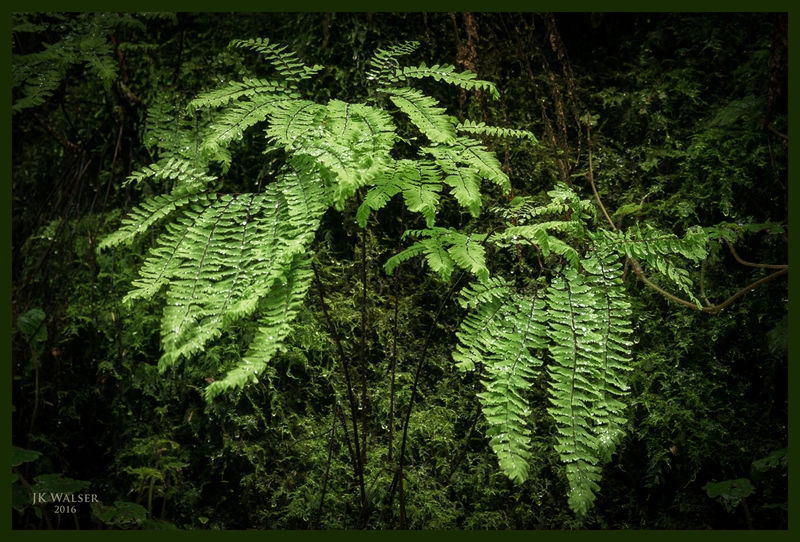 Fern Composition