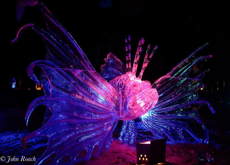 Tiger Fish Sculpture