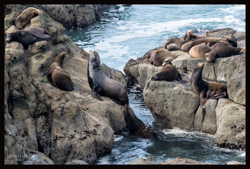 Sea Lion Resort