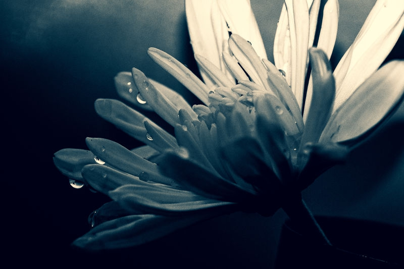Flower in the dark