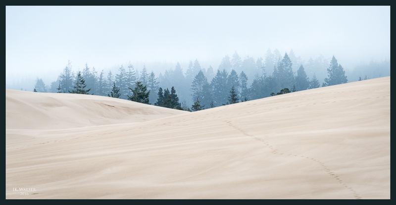 Foggy Dunes