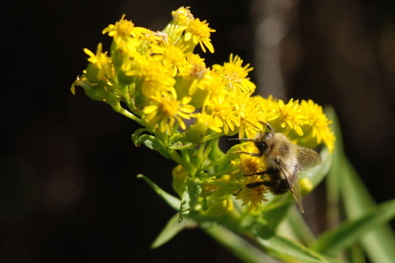 Bee110