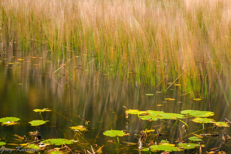The_Tarn-Monet_Look