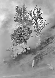 Ghost Trees in the M... /ericbowles/