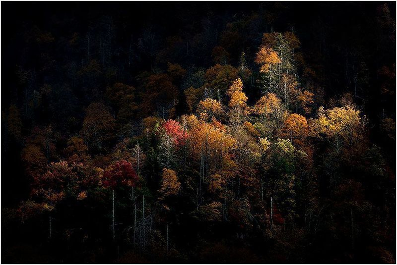 Spotlit Trees in the Smokies