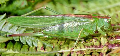 Flip, the grasshopper