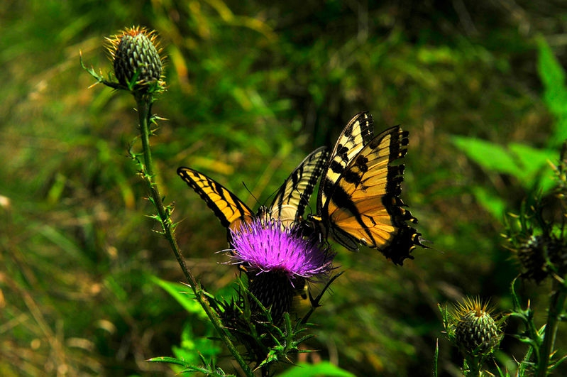 Schmetterlige