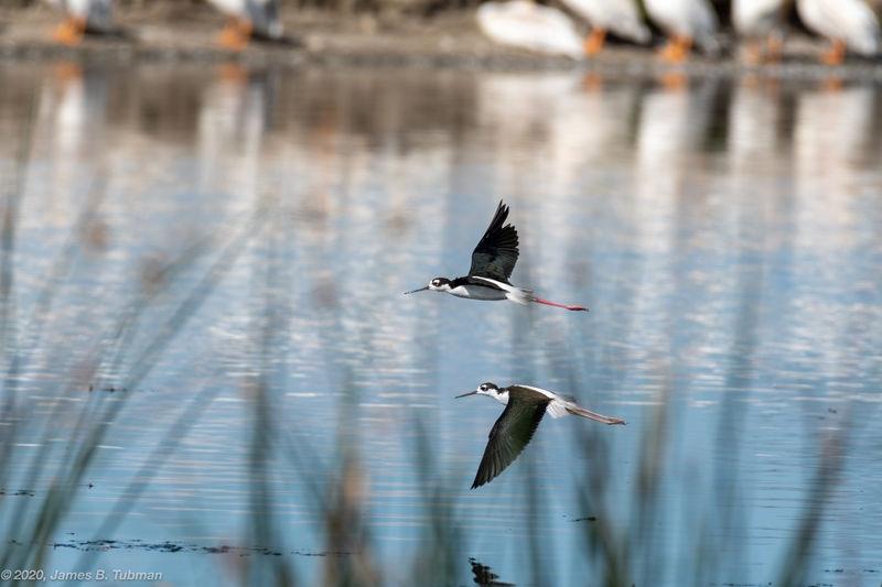 Stilts in Flight, Frank Lake