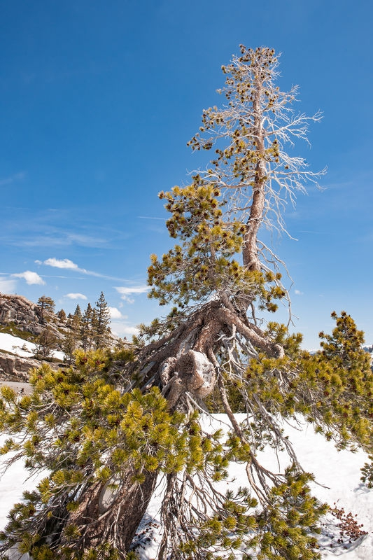 Donner Pass and Summit