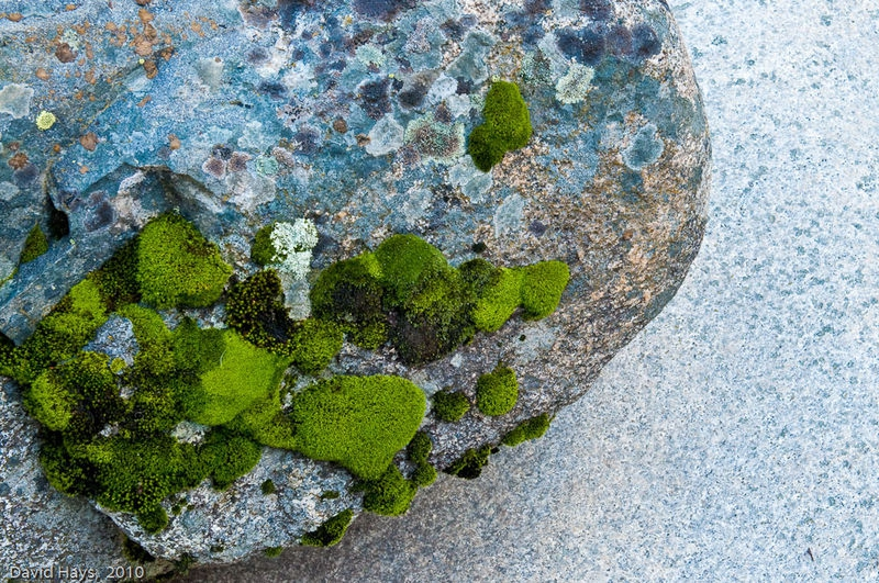 Moss covered rock on river-worn granite