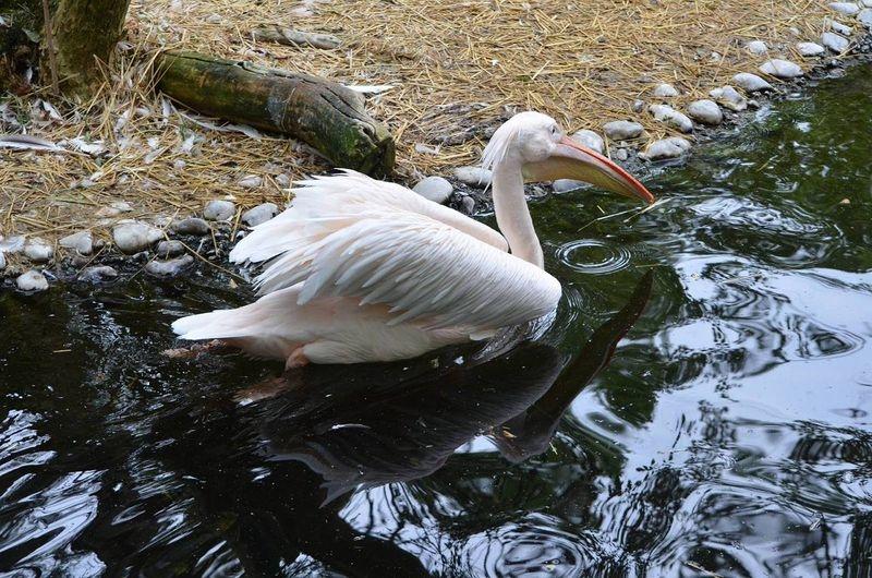 Tierpark_Hellabrunn_2015_106