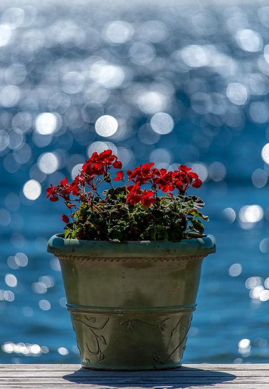 Flowers with Water Highlights