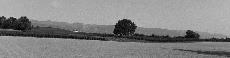 Fields_in_Switzerland.jpg
