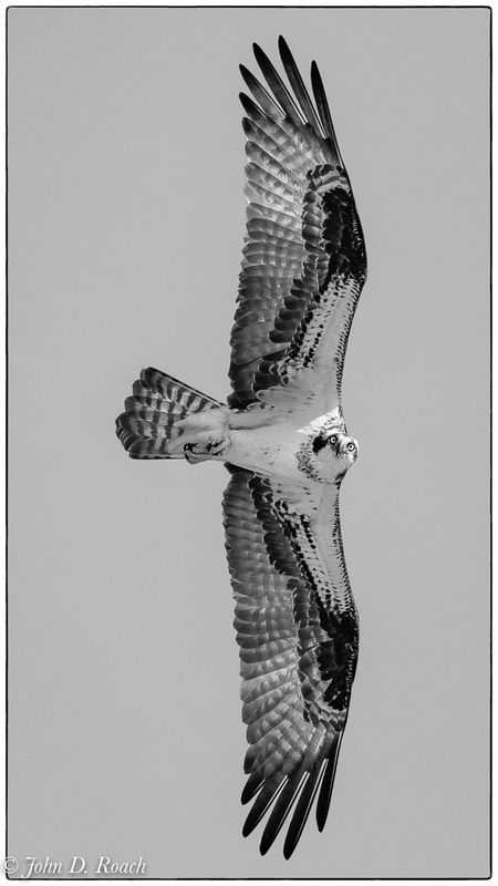 Osprey_in_Action-6
