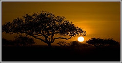 Serengeti, Sunset (MNP500)