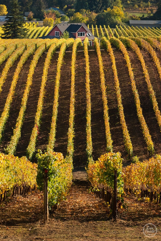 Travel Photography - Vineyard View