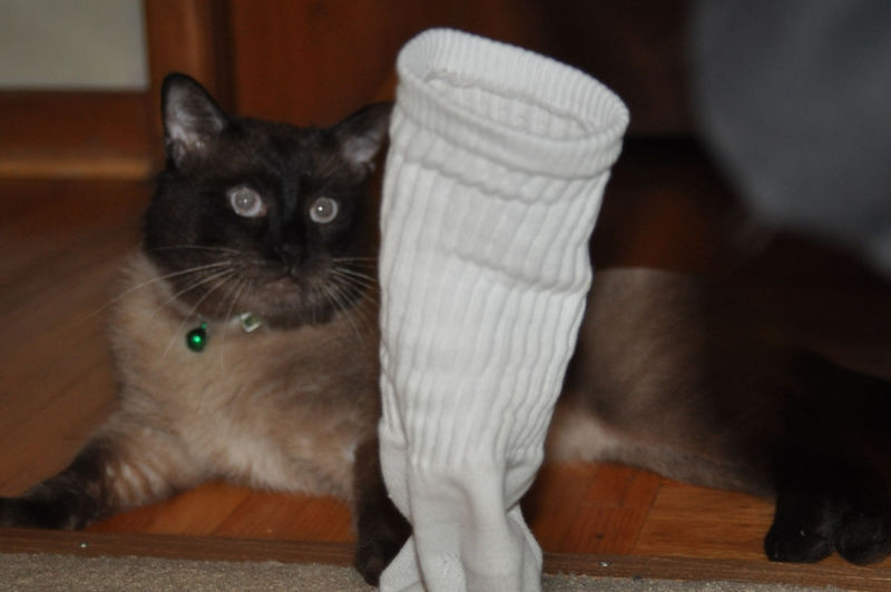 Cat steals sock  #3