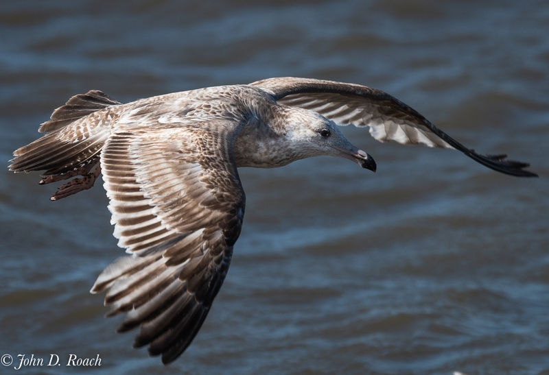 Gull at the Shore