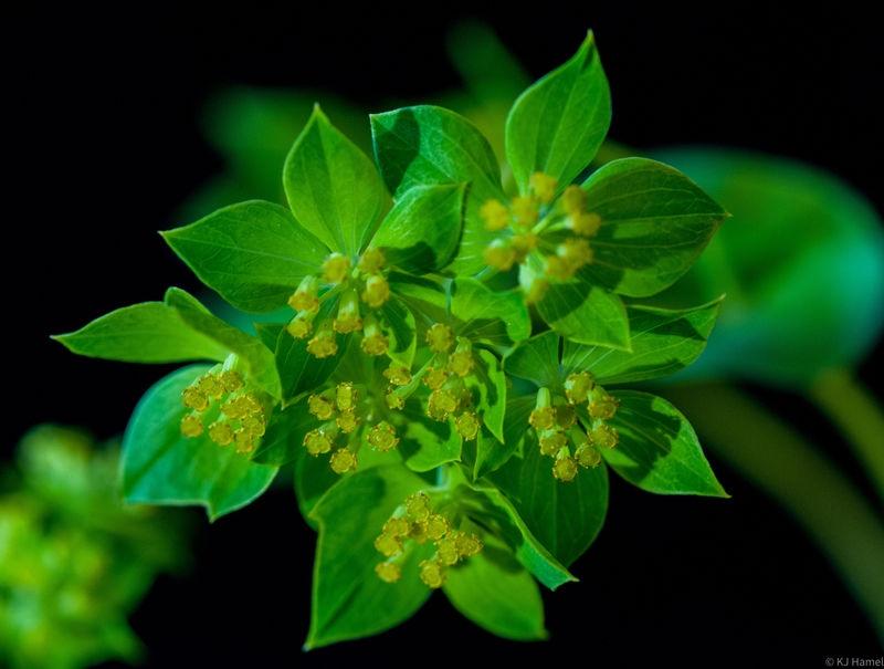 Bouquet Greenery