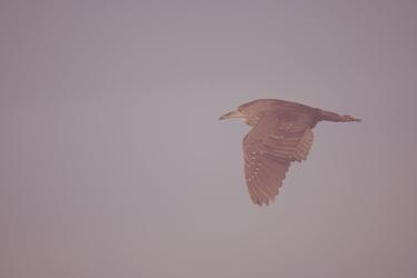 bird113.nef