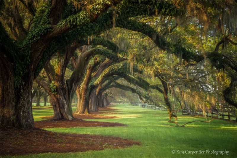 """Avenue of Oaks"""