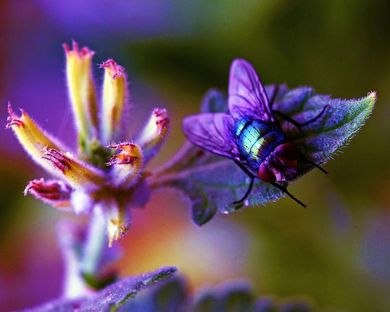 Competing Mantis Habitat