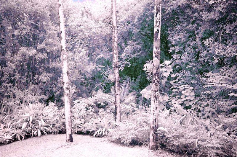 TREES_THREE